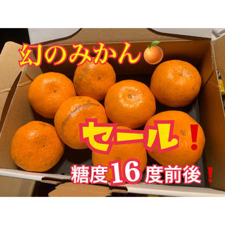 熊本県 幻の河内みかん 5kg  ☆完熟無農薬ミカン☆ 農家直送(フルーツ)
