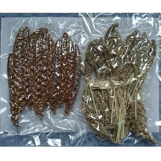 赤粟穂 ひえ穂 セット 無農薬栽培 北海道から(鳥)
