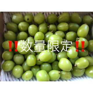長野県産 訳あり シャインマスカット 1キロ 粒(フルーツ)