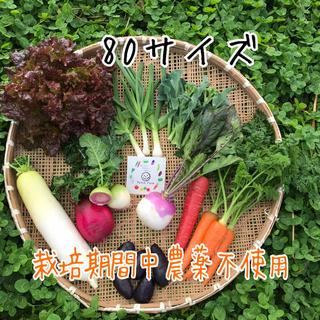 【栽培期間中農薬不使用】渥美半島から直送!旬彩野菜バスケット(野菜)