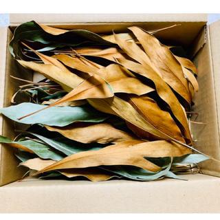 ドライフラワー グレビレアゴールド葉のみ・50枚(ドライフラワー)