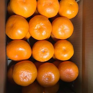 和歌山県有田産 マルチ大玉みかん 5kg(フルーツ)