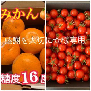 感謝を大切に☆様 幻のみかん5kg  キャロルセブン500g (フルーツ)