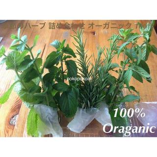 お試し 季節のハーブ 5種 完全無農薬無化学肥料有機栽培 オーガニック(野菜)