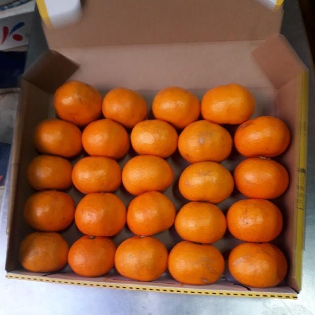 蒲郡みかん 小玉 1.2kg 送料無料 訳あり 食品/飲料/酒の食品(フルーツ)の商品写真
