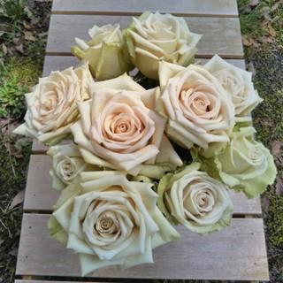 バラ苗 薔薇苗 切り花品種 デザート(プランター)