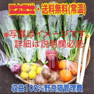 【ねずみのオリジナルイラスト付き】自慢の自家製蜂蜜・野菜・果物セット100サイズ(野菜)