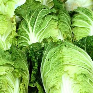大山山麓 無農薬 無化学肥料栽培 白菜2玉 送料込(野菜)