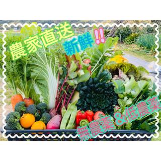 新鮮野菜 野菜詰め合わせ 無農薬 低農薬(野菜)