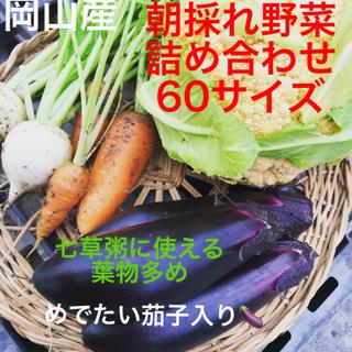 野菜ソムリエ選別✨採れたて野菜セット茄子入り(野菜)
