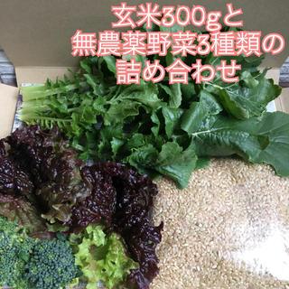 本日限定*玄米300gと無農薬野菜3種類の詰め合わせ*ブロッコリー等*翌日配達*(野菜)