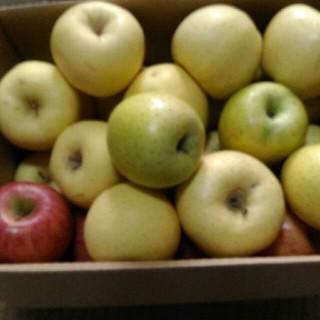 規格外 りんご詰め合わせ 箱込み7kg(フルーツ)