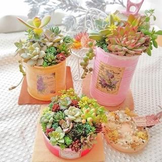 ■専用■多肉植物 多肉寄せ植え カラフルcolorリメ鉢  すぐ飾れるセット(その他)