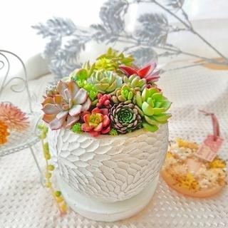 ■専用おまとめ3点■多肉植物 贅沢寄せ植え キューブ ホワイト陶器鉢 受け皿つき(その他)