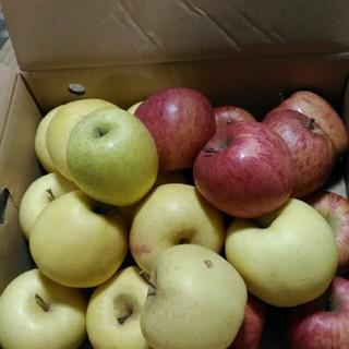 箱込み6kg  規格外 りんご詰め合わせ(フルーツ)