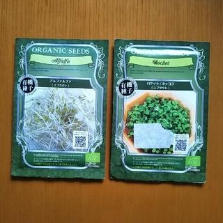 【500円→350円】スプラウトの種 オーガニック(ルッコラ・アルファルファ)(野菜)