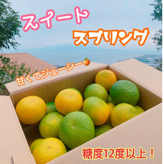 熊本県 濃厚ミカン☆エレンスイートスプリング☆ 5kg 農家直送(フルーツ)