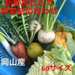 野菜ソムリエ厳選🍆お野菜詰め合わせ茄子入り(野菜)