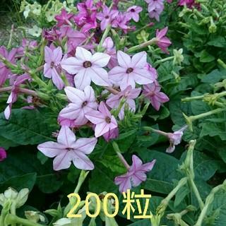 花タバコMIX 200粒(ドライフラワー)