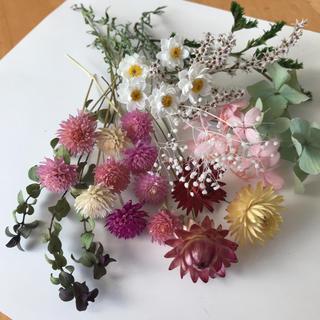 花かんざし、貝細工、千日紅ドライフラワー花材MIX(ドライフラワー)