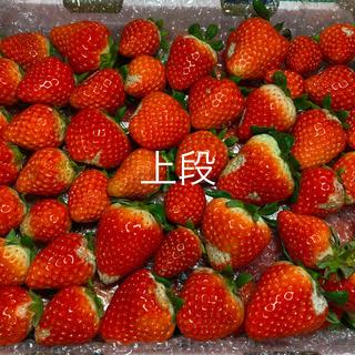 加工用苺●さがほのか2.1kg●いちご イチゴ(フルーツ)