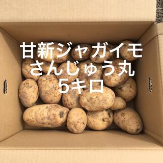 鹿児島産甘新ジャガイモ5キロ^_^(野菜)