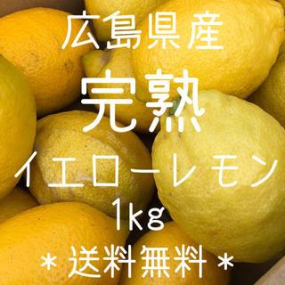 完熟レモン 1キロ 広島県 大崎上島産 瀬戸内 もぎたて ノーワックス(フルーツ)