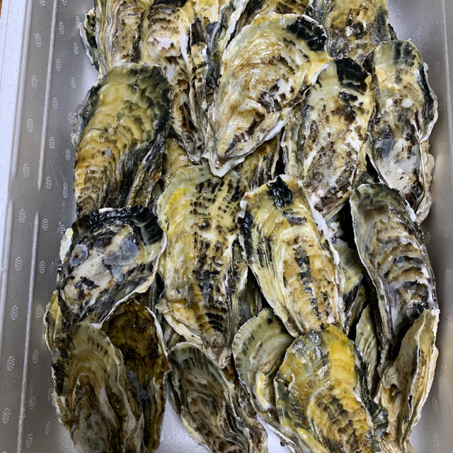 生牡蠣 2.5キロ 伊万里湾産 殻付きカキ ナイフ軍手付き ご贈答に 送料無料! 食品/飲料/酒の食品(魚介)の商品写真