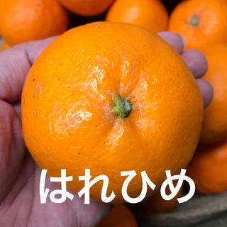 みかんとオレンジの良いとこどり はれひめ(フルーツ)