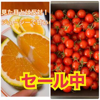熊本県 セール中☆高級ミニトマト500g 希少柑橘2kgセット(野菜)