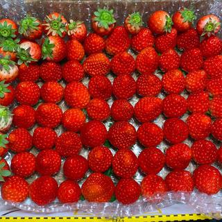 小粒ちゃん♡さがほのか600g●いちご苺イチゴ(フルーツ)