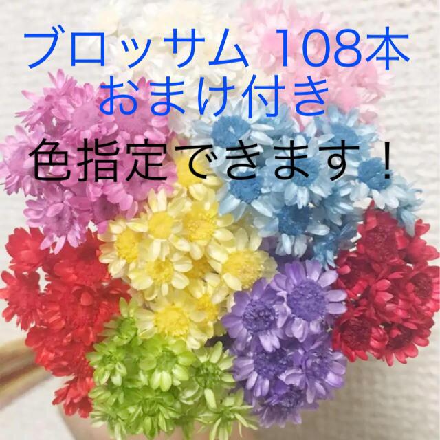 スターフラワー ブロッサム 108本 おまけ付 レジン ドライフラワー ハンドメイドのフラワー/ガーデン(ドライフラワー)の商品写真