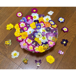 お花屋さんが作った春色プリムラとビオラのお詰め合わせ Box   (ドライフラワー)