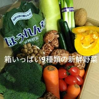 美味しい九州産✨70〜80サイズ新鮮冬野菜9種類を箱いっぱい詰め合わせセット✨(野菜)