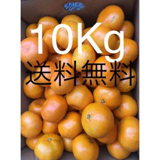和歌山県 訳あり傷ありみかん約10Kg  (フルーツ)