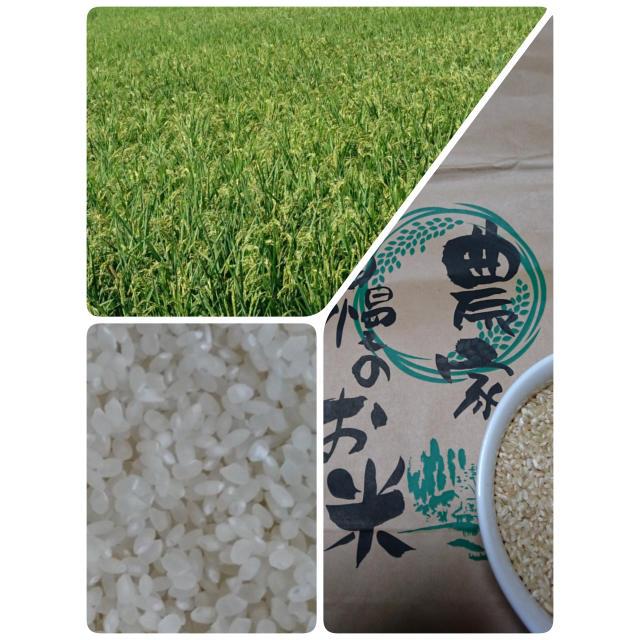 コシヒカリ  10キロ  送料無料 食品/飲料/酒の食品(米/穀物)の商品写真
