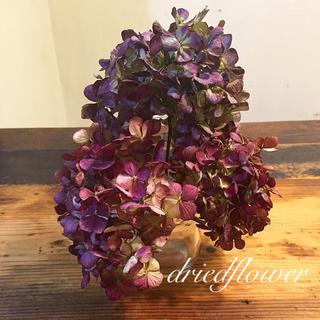 ドライフラワー  秋色紫陽花(ドライフラワー)