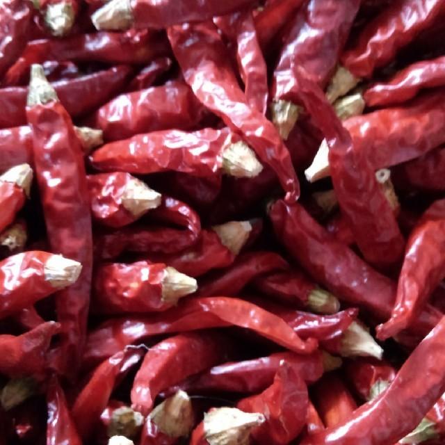 鷹の爪唐辛子 乾燥 20g おまけ増量中 食品/飲料/酒の食品(野菜)の商品写真
