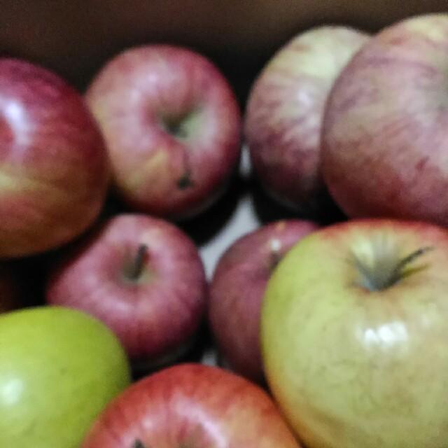 早いものがち! サービス品 規格外 りんご詰め合わせ 約5kg(箱込み) 食品/飲料/酒の食品(フルーツ)の商品写真