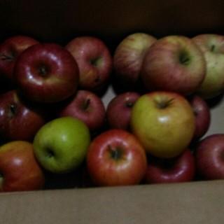 早いものがち! サービス品 規格外 りんご詰め合わせ 約5kg(箱込み)(フルーツ)