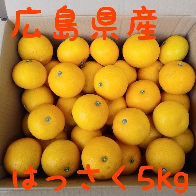 広島県 はっさく5kg 食品/飲料/酒の食品(フルーツ)の商品写真