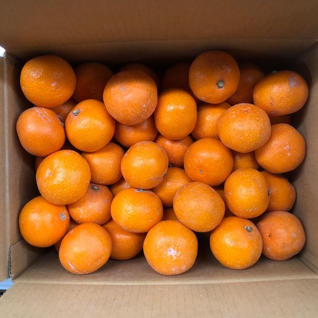 新品!! 美味しい早生みかん 3s 3キロ 食品/飲料/酒の食品(フルーツ)の商品写真