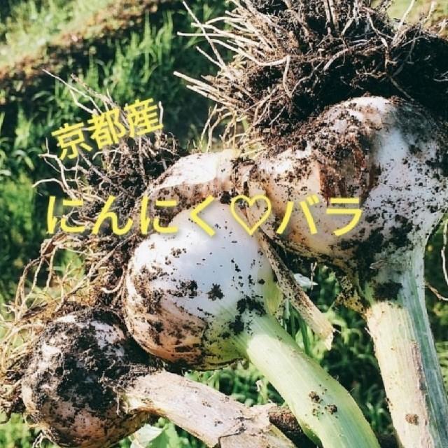 京都産にんにくバラ🧡💛60粒数以上♥🍀無農薬栽培🌱🍀お醤油漬けにも🧡 食品/飲料/酒の食品(野菜)の商品写真