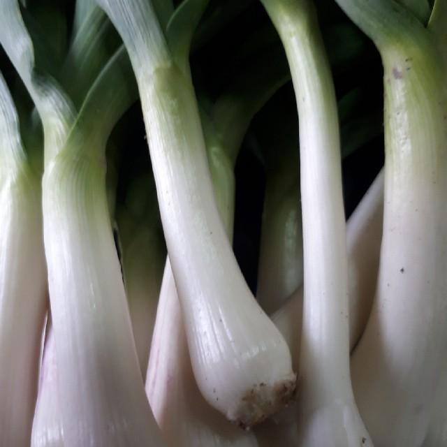 葉にんにく500グラム(農薬、除草剤不使用栽培) 食品/飲料/酒の食品(野菜)の商品写真
