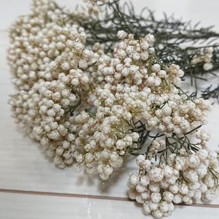 ライスフラワー ドライフラワー ホワイトピンク 【花材】(ドライフラワー)