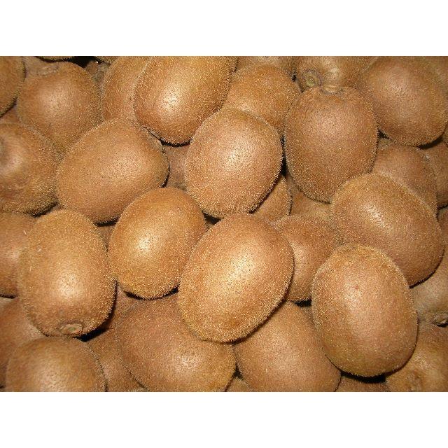 キウイフルーツ 9kg 食品/飲料/酒の食品(フルーツ)の商品写真
