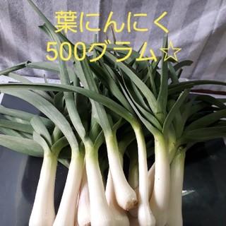 葉にんにく500グラム(農薬不使用栽培)ネコポスト(野菜)