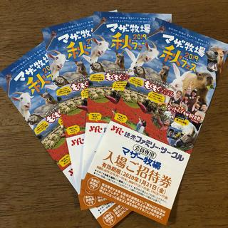 マザー牧場 招待券  4枚(動物園)