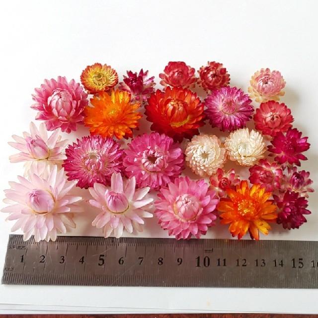 花材 ヘリクリサム ドライフラワー ハンドメイドのフラワー/ガーデン(ドライフラワー)の商品写真