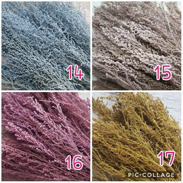 【数量限定】選べるストーベ11色 ハンドメイドのフラワー/ガーデン(ドライフラワー)の商品写真